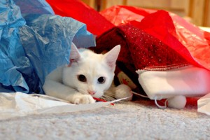 cat in discarded wrapping paper