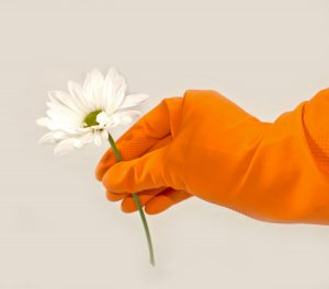 gloved hand holding a daisy