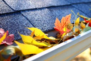 Fall Leaves Stuck In Gutter